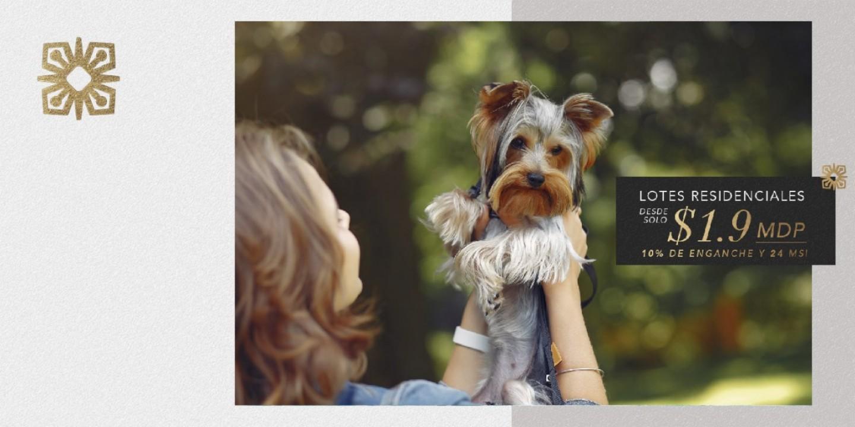 Pet Park, amenidad premium para tu mascota
